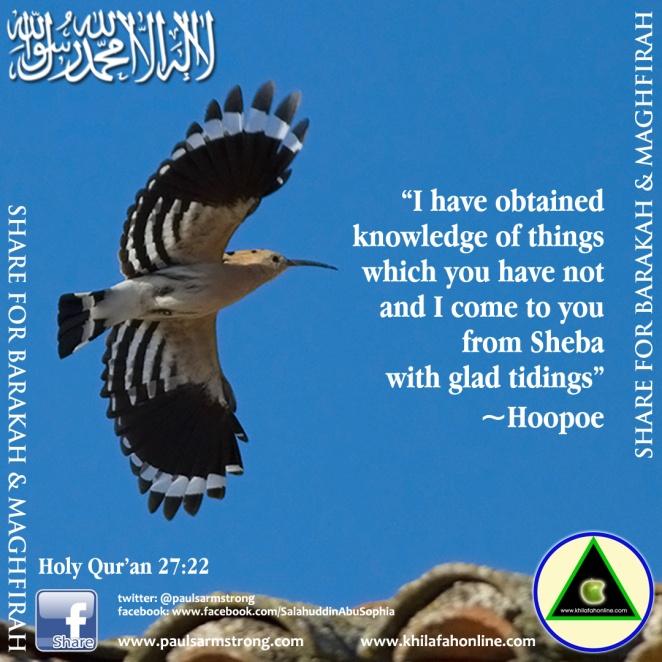 Hoopoe - Holy Quran 27:22