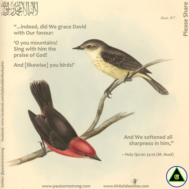 Birds, Sing with him the praise of God