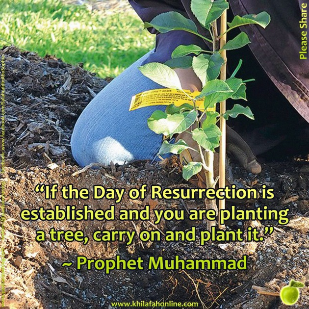 Prophet Muhammad, carry on and plant the tree