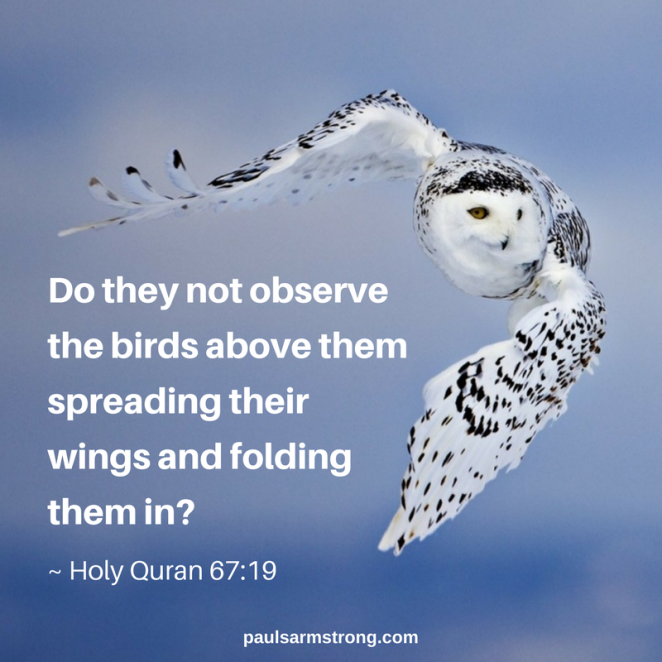 quran-do-they-not-observe-the-birds